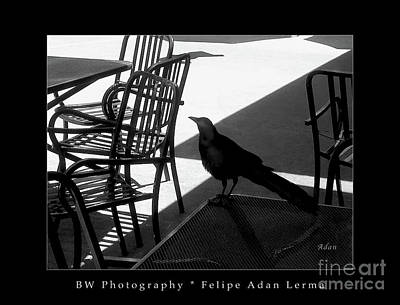 Photograph - Black Bird At Central Market Bw Greeting Card Poster by Felipe Adan Lerma