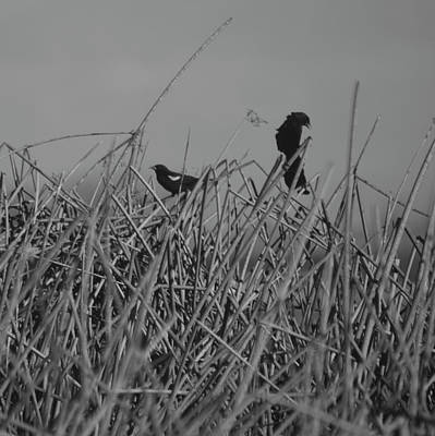 Photograph - Black Birds by Eric Tressler