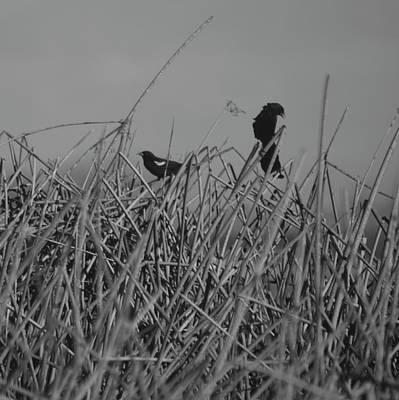 Photograph - Black Birds by Eric Tressler
