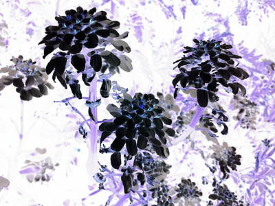 Wall Art - Photograph - Black Blooms I I by Orphelia Aristal