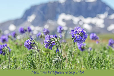 Photograph - Black Butte And Sky Pilot Wildflowers by Jennie Marie Schell