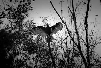 Virginia Photograph - Black Buzzard 4 by Teresa Mucha