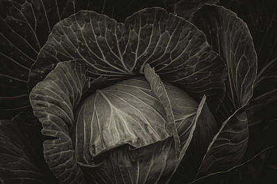 Photograph - Black Cabbage by James BO Insogna