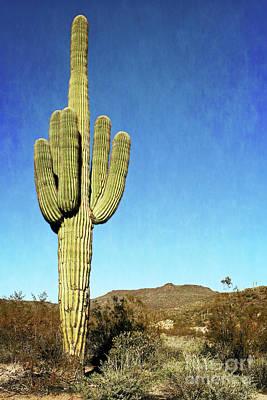Photograph - Black Canyon - Giant Saguaro Cactus by Gabriele Pomykaj