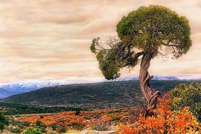 Art Print featuring the photograph Black Canyon Juniper - Colorado - Autumn by Jason Politte