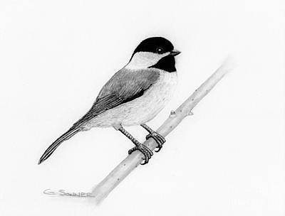 Chickadee Drawing - Black Cap by George Sonner