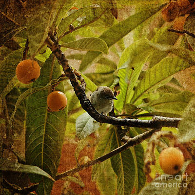 Photograph - Black Cap In A Lemon Tree by Liz Alderdice