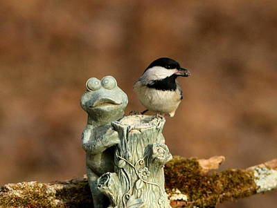 Black-capped Chickadee And Frog Art Print by Sheila Brown
