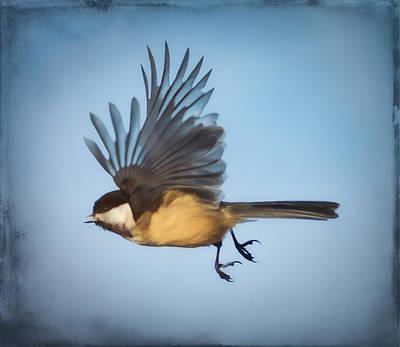 Wall Art - Photograph - Black-capped Chickadee In Flight by Martin Belan