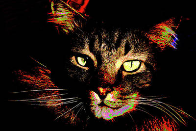 Photograph - Black Cat 2 by Garry McMichael