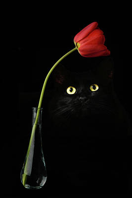 Photograph - Black Cat And Rose by Carlos Diaz