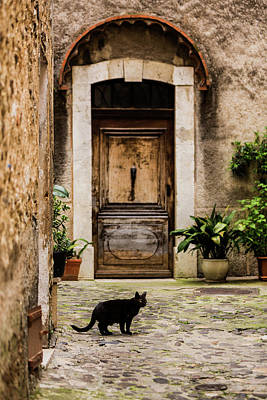 Of Black Cats Photograph - Black Cat And Wood Door, Biot, France by Maggie McCall