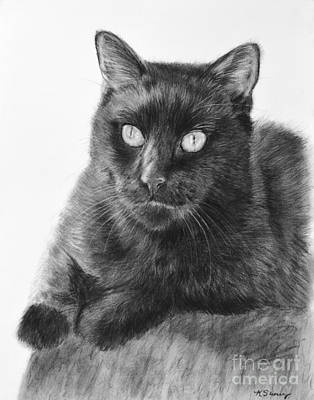 Drawing - Black Cat Detailed Drawing by Kate Sumners