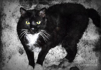 Digital Art - Black Cat by Georgianne Giese