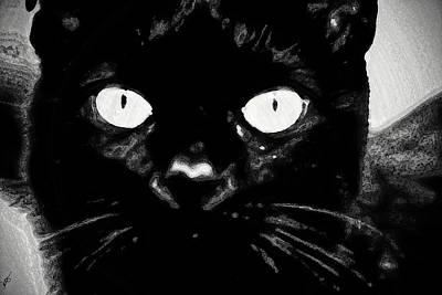 Photograph - Black Cat by Gina O'Brien