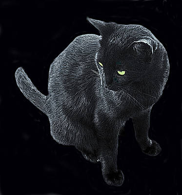 Photograph - Black Cat In A Coal Mine by Ian  MacDonald