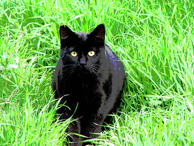 Black Cat In A Green Field Art Print