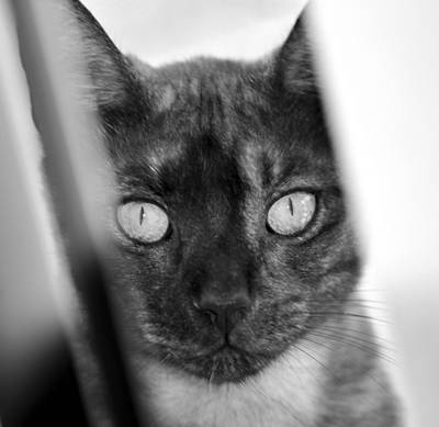 Photograph - Black Cat In Black And White by David Lee Thompson