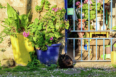 Photograph - Black Cat In Courtyard In Rhodes Town, Rhodes, Greece by Global Light Photography - Nicole Leffer