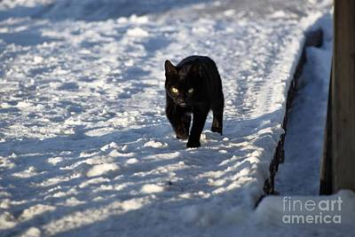 Photograph - Black Cat In Snow by Mark McReynolds