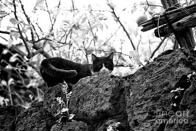 Photograph - Black Cat In Sorrento by John Rizzuto
