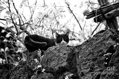 Black Cat In Sorrento Art Print