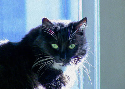 Photograph - Black Cat In Sun by Bonnie Follett