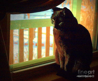 Photograph - Black Cat In Window by Christine S Zipps