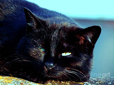 Digital Art - Black Cat by Jasna Dragun