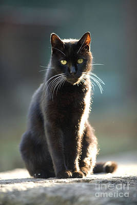 Good Luck Photograph - Black Cat by Jean-Michel Labat