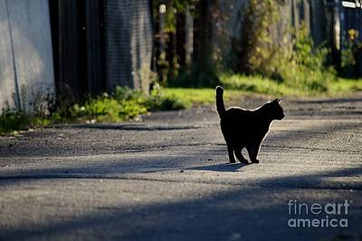 Photograph - Black Cat by Mary-Lee Sanders