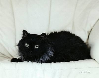 Photograph - Black Cat On Leather Chair by Tracey Vivar