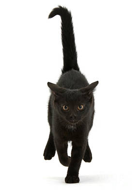 Photograph - Black Cat On The Run by Warren Photographic