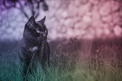 Photograph - Black Cat by Silvia Bruno