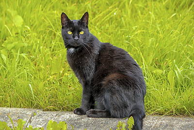 Photograph - Black Cat Sitting Outdoor by Elenarts - Elena Duvernay photo
