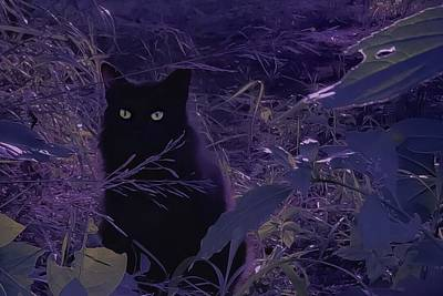 Photograph - Black Cat - When The Birds Are At Their Best. by Michele Carter