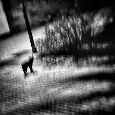 Cats Photograph - Black Cat #animal #cat #nightshot by Rafa Rivas