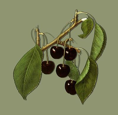 Digital Art - Black Cherries by Ericamaxine Price