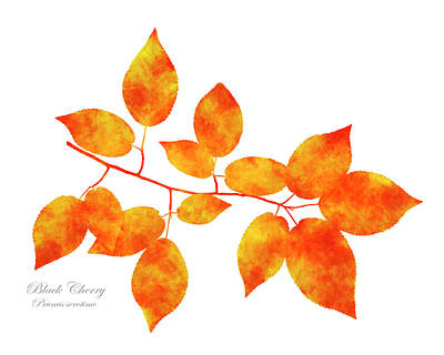Mixed Media - Black Cherry Pressed Leaf Art by Christina Rollo