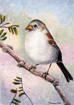 Susan Conner Drawing - Black-chinned Sparrow by Susan Conner