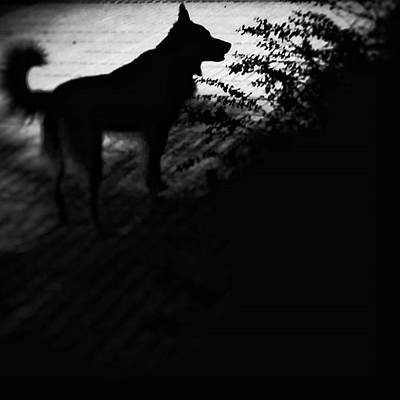 Pets Wall Art - Photograph - Black Chuvak #dogs #dogsofinstagram by Rafa Rivas