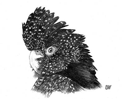 Cockatoo Drawing - Black Cockatoo by Billy Williams
