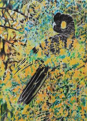 Cockatoo Drawing - Black Cockatoo In Wattle by Leonie Bell