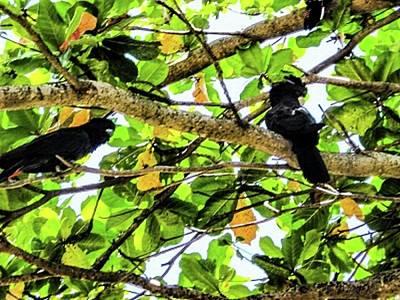 The Bunsen Burner - Black Cockatoos by Louie Navoni