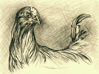 Drawing - Black Cockerel by MM Anderson