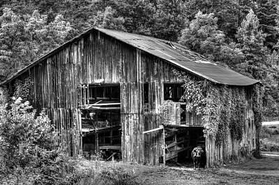 Photograph - Black Cow In The Barn Waiting by Douglas Barnett