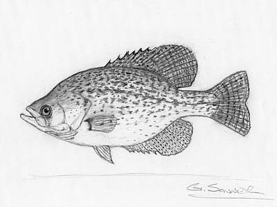 Black Crappie Drawing - Black Crappie by George Sonner