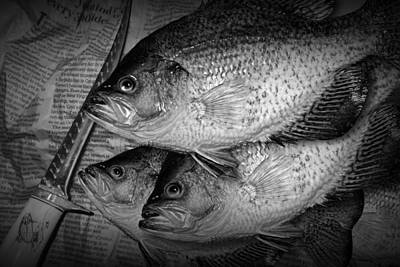 Randall Nyhof Royalty Free Images - Black Crappie Panfish with Fish Filet Knife in Black and White Royalty-Free Image by Randall Nyhof