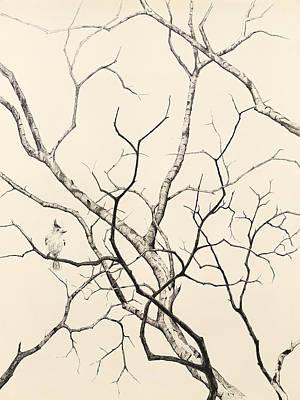 Black Crested Titmouse Art Print by Paul Illian