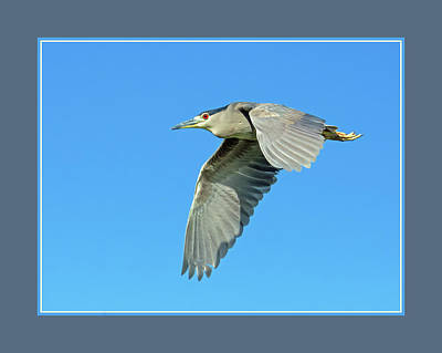 Photograph - Black-crowned Night Heron 1171-051518-1cr-matte by Tam Ryan